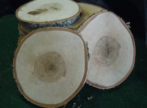 Large Customizable Birch Slices
