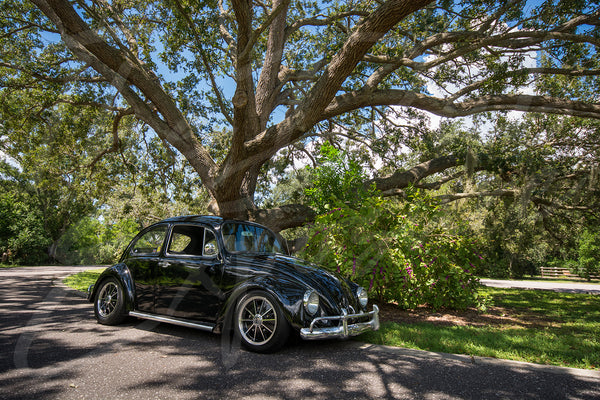 '67 Beetle Under The Oaks - Original Print