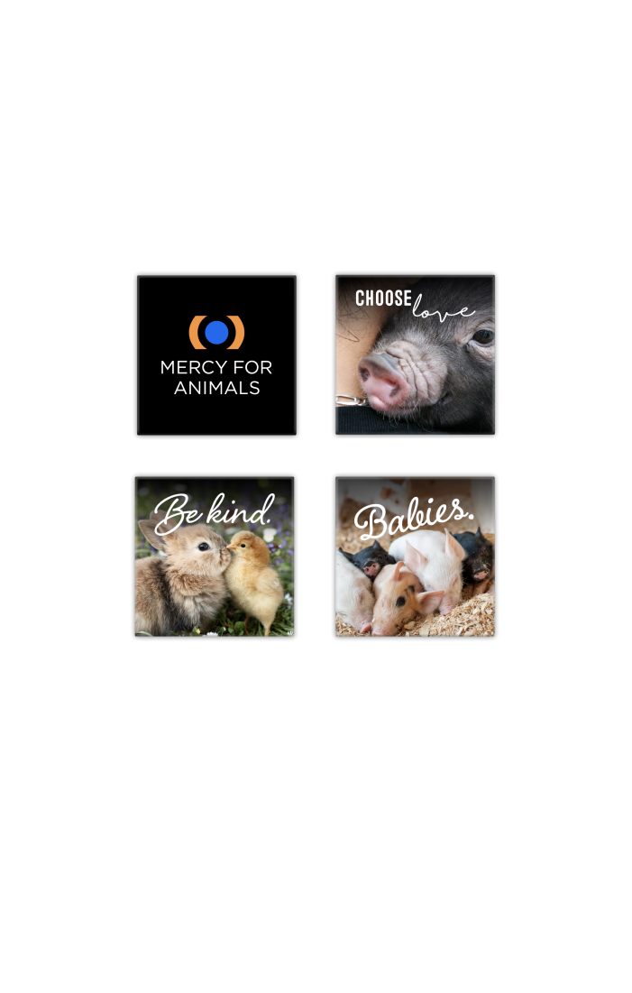 Compassion Magnet Pack | ShopMFA.com
