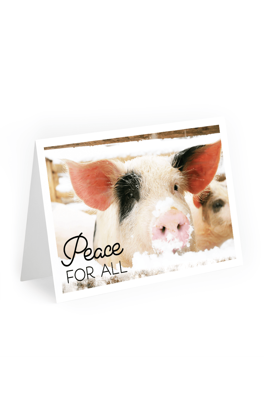 2020 Mercy For Animals Holiday Cards, Piglet