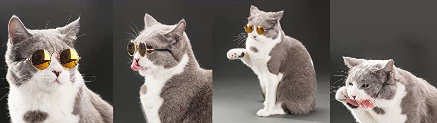 A cat wearing round glasses