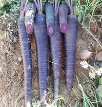 Deep Purple Carrot