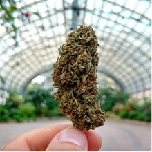 Load image into Gallery viewer, One Ounce Premium Indoor CBD Flower. - NovaCBD