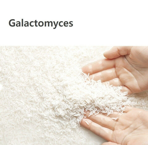 [Manyo Factory] Galactomy Essence Mist 120ml/4oz with Galactomyces K-beauty - BEST BEAUTIP