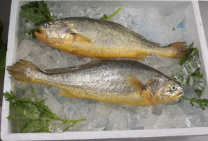 Frozen Yellow Croaker 野生黃花魚