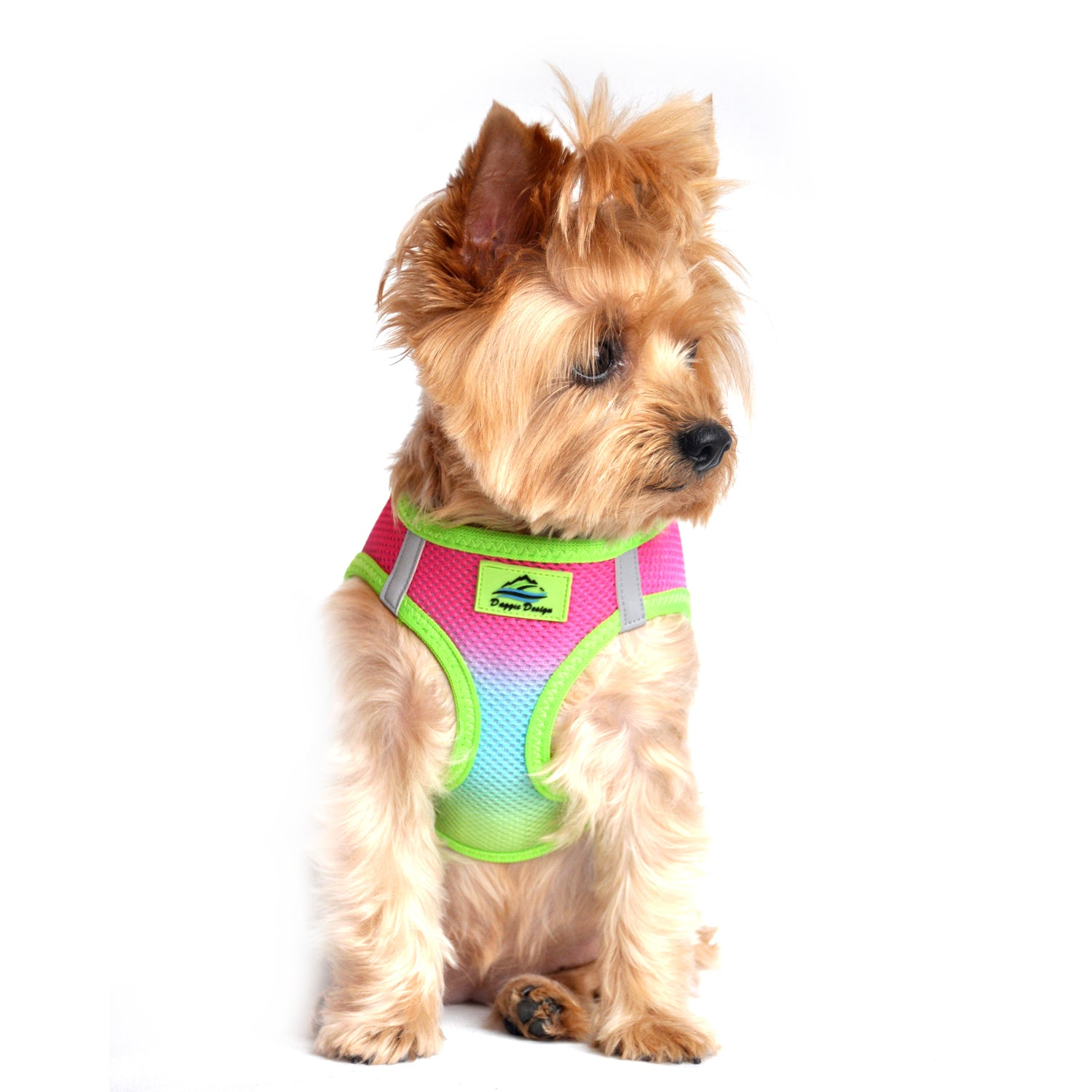 American River Choke Free Dog Harness - Rainbow