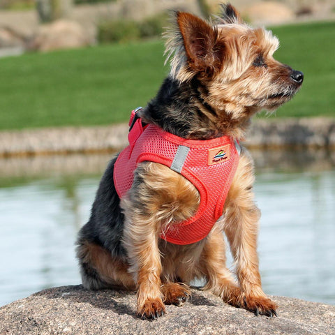 American River Solid Ultra Choke-Free Mesh Dog Harness - Coral