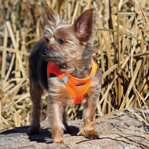 American River Solid Ultra Choke-Free Mesh Dog Harness - Hunter Orange