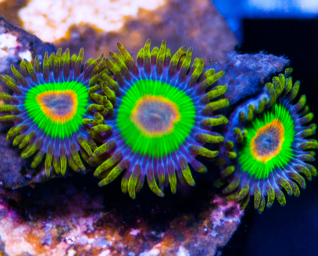 How to Cycle Saltwater Aquarium