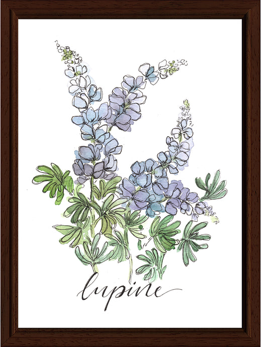 Lupine Watercolor