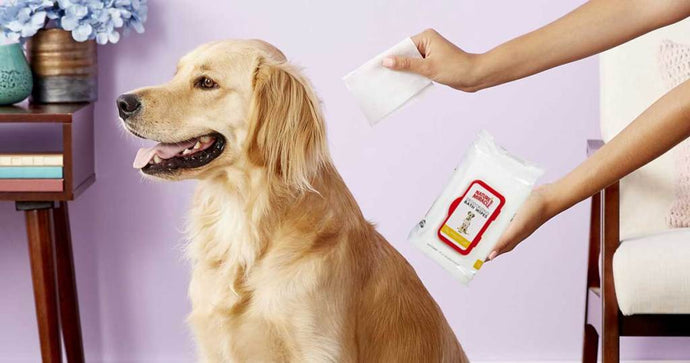 200 Nature's Miracle Pet Wipes Only $8 Shipped on Amazon ($24 Value)