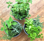 Herb Baskets