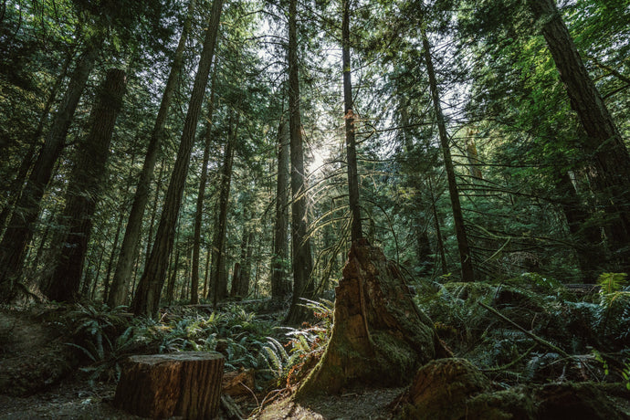 Forest Bathing. A Path to Mindfulness
