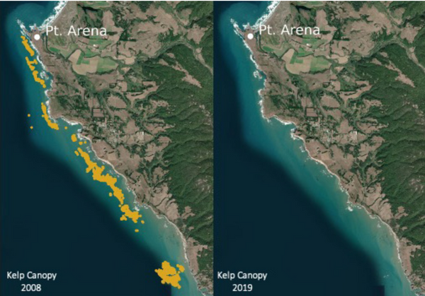 Satellite photo showing dramatic decline of Northern California kelp forests in the last 10 years.