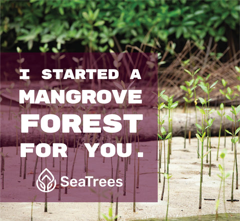 Plant Mangrove SeaTrees