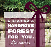 Gift Mangroves SeaTrees