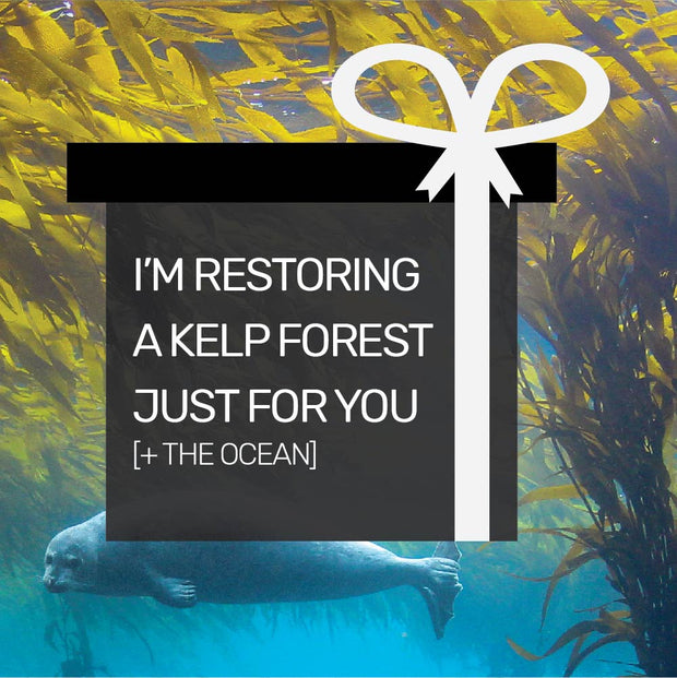 Gift Kelp Forest Restoration