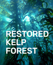 Hat: Help California's Kelp - Patch the Planet