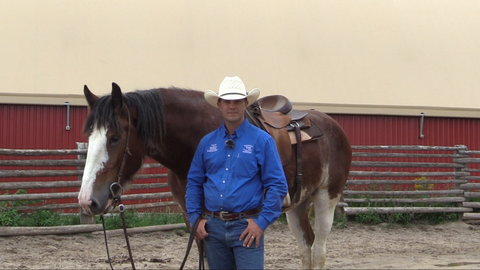 The Horse Trainers RFD-TV Canada Jason & Bronwyn Irwin Horsemanship