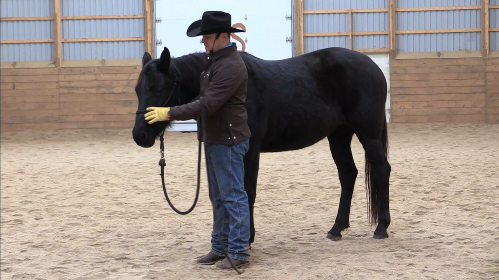 Jason Irwin horse training dvd video 6 Week Horsemanship Journey
