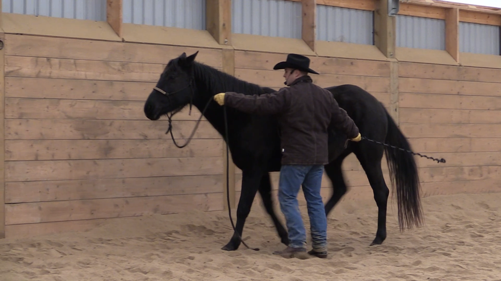 Jason Irwin Horsemanship horse training video dvd Ground series 6 Week Horsemanship Journey