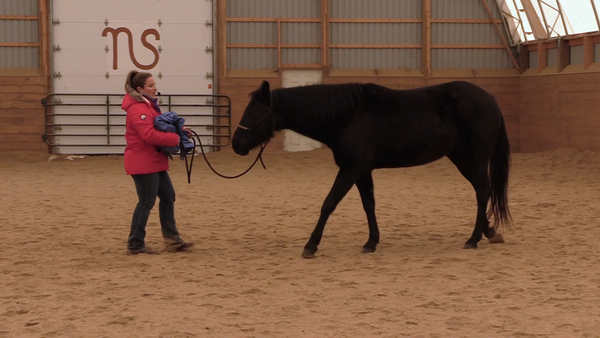 Bronwyn Irwin horse training video