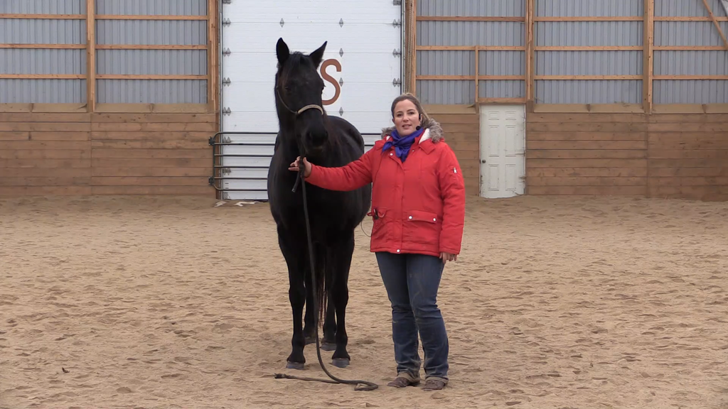 Bronwyn 6 Week Horsemanship video series horse training Jason & Bronwyn Irwin Horsemanship