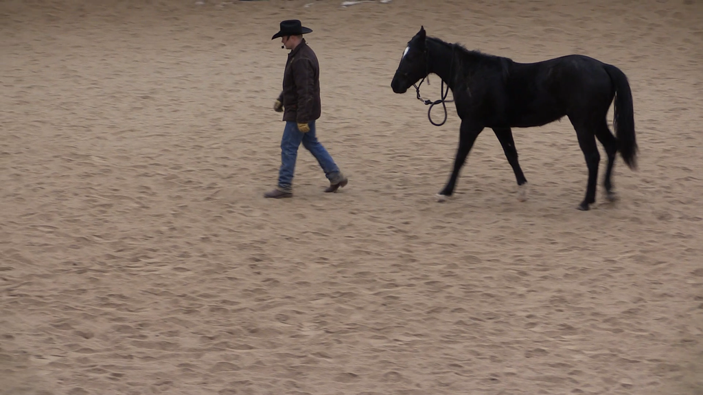 Jason Irwin Horse training video dvd 6 Week Horsemanship