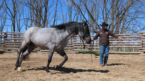6 Week Horsemanship Journey: Ground Exercise Video Series