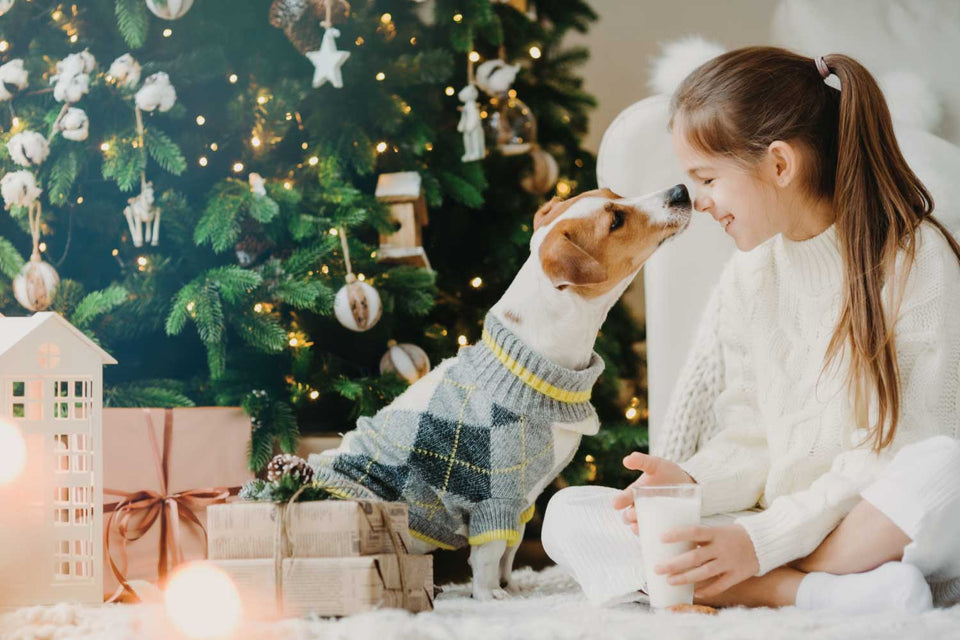 Preparing Your Pet for the Excitement of the Holidays