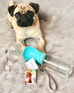 pet bottle, water bottle for dogs, dog supplies, pet accessories, travel bottle, pug supplies, pet shop, pet feeding