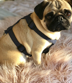 pet harness, pug harness, dog harness, quality pet supplies, pets, dogs, pugs, frenchie harness, dottie harness, polka dot harness, dog collars, bow harness, bow collars, unique collars, luxury pet wear