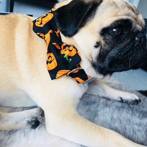 halloween, pet halloween, dog collars, harness, dog wear, bulldog, pug