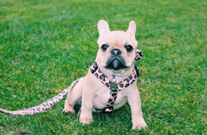 The Khloe Harness
