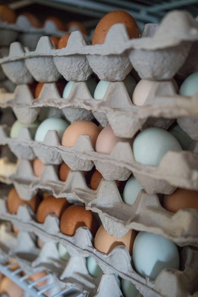 Increase Hatchability Using Better Hatching Egg Care and Storage Practices