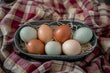 Hatching Eggs: Mail Order