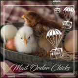 Day Old Chicks: Mail Order
