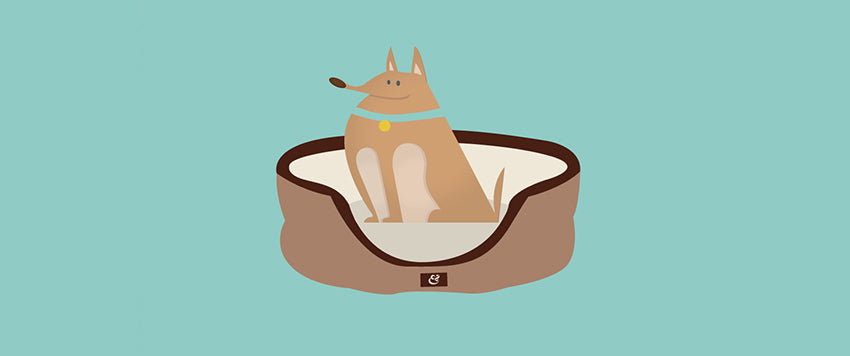 5 REASONS YOUR DOG NEEDS THEIR OWN BED