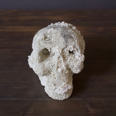 The Skull Porcelain Sculpture #29
