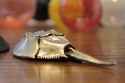 Horseshoe Crab Bottle Opener Brushed White by Matt Hall
