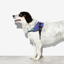 Peitoral Zee.Dog FlyHarness Wicked