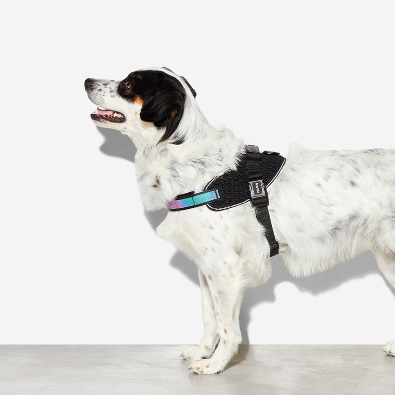 Peitoral Zee.Dog FlyHarness Gotham