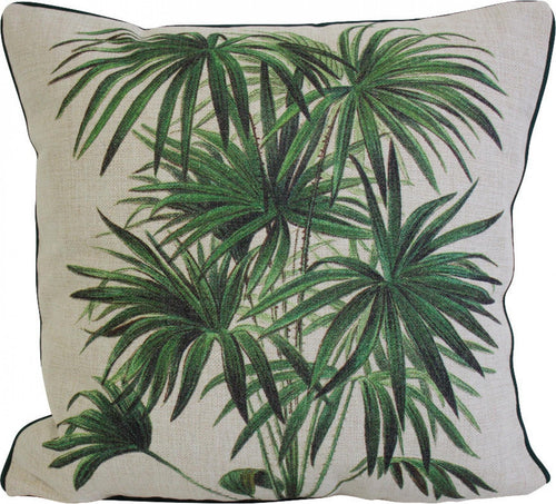 Cushion Palm
