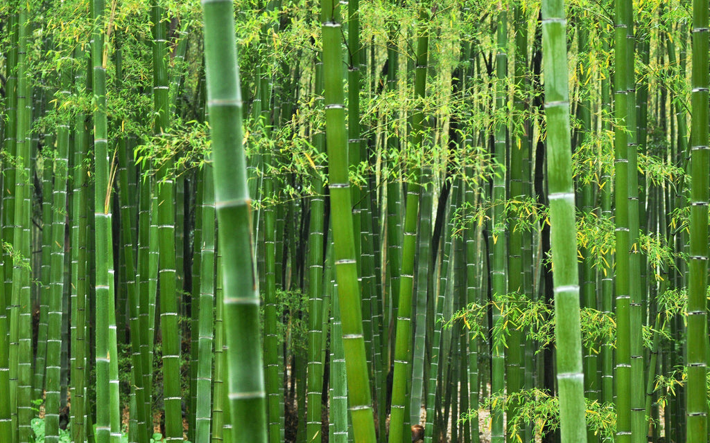 Bamboo Is Changing The Way We Sleep
