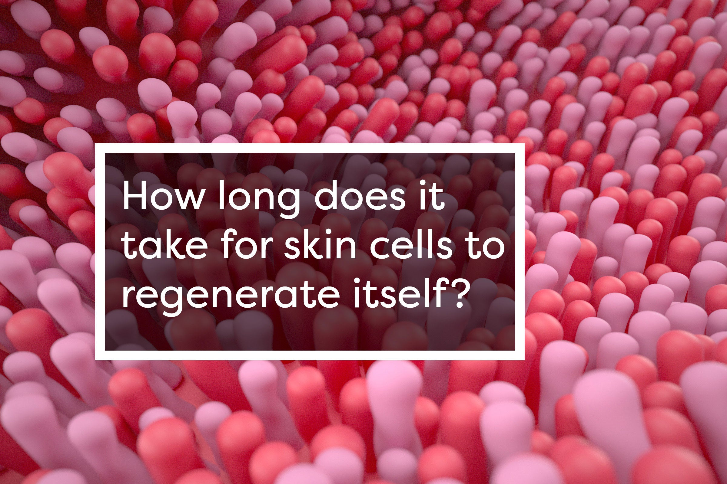 HOW LONG DOES IT TAKE FOR SKIN CELLS TO REGENERATE ITSELF?
