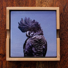 Load image into Gallery viewer, Set of Coasters - Red Tailed Black Cockatoo - Australian Native - Beths Emporium