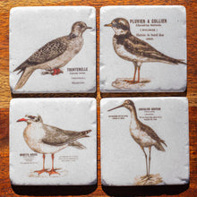 Load image into Gallery viewer, Set of Coasters - French Birds - Beths Emporium