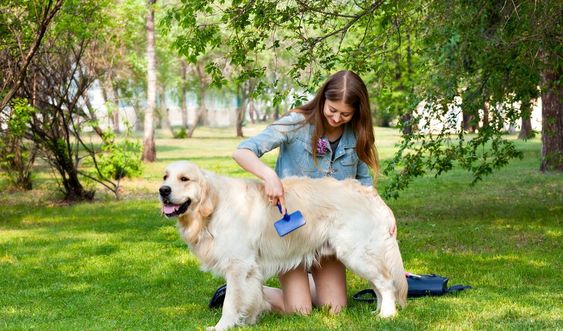 Best dog grooming tips