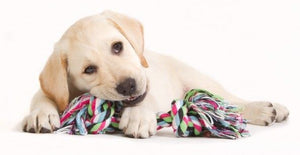 Dog Puppy Cotton Chew Knot Toy 15 cm  (Random Color ) - Tomotorme