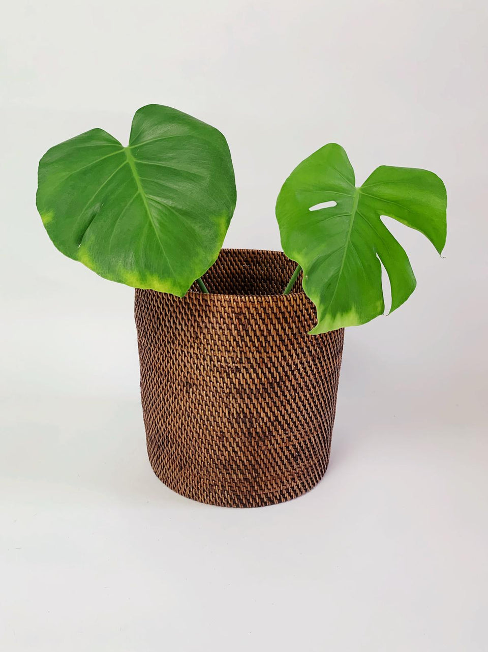 Plant Basket - Small